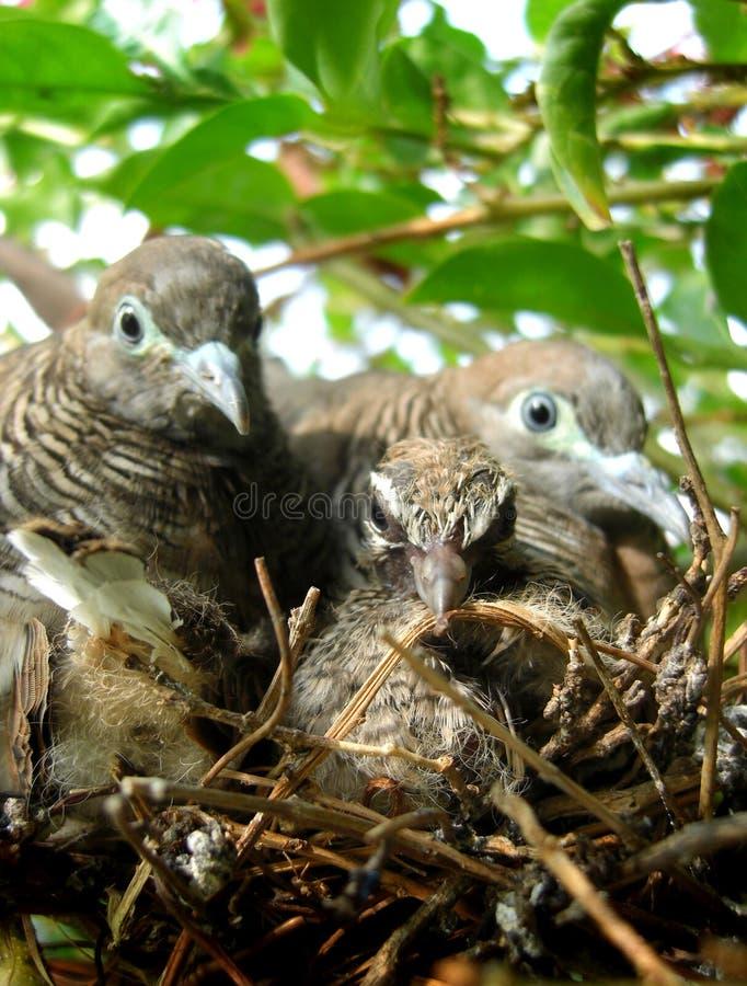 Tauben und Babys stockbild