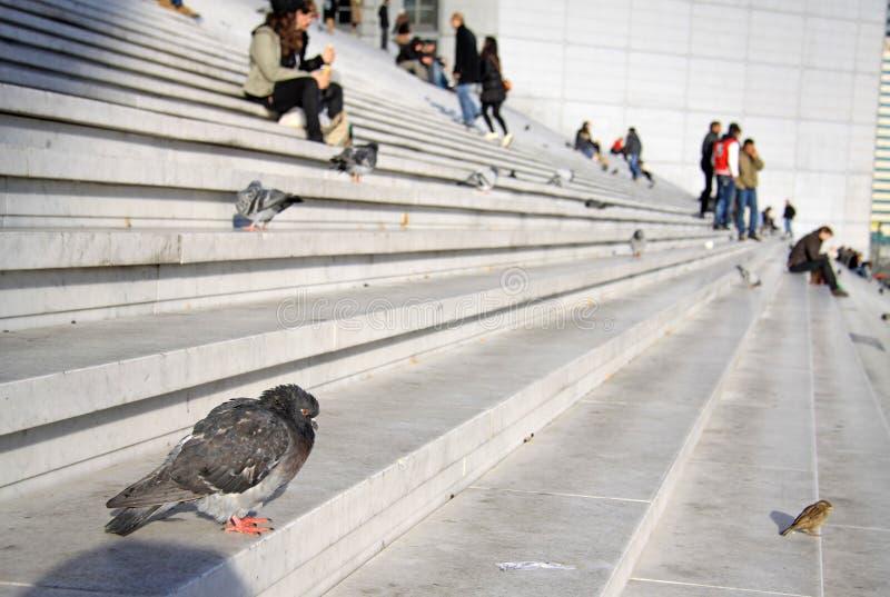 Tauben und Leute auf der Treppe des Grande Arche im La-Verteidigungsbezirk in Paris lizenzfreie stockbilder