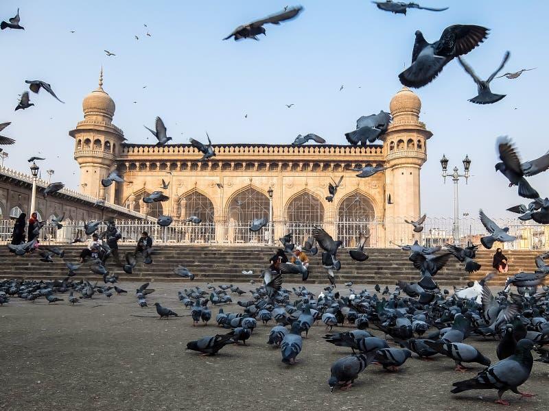 Tauben vor Mecca Masjid, ein berühmtes Monument in Hyderabad, Indien lizenzfreie stockbilder