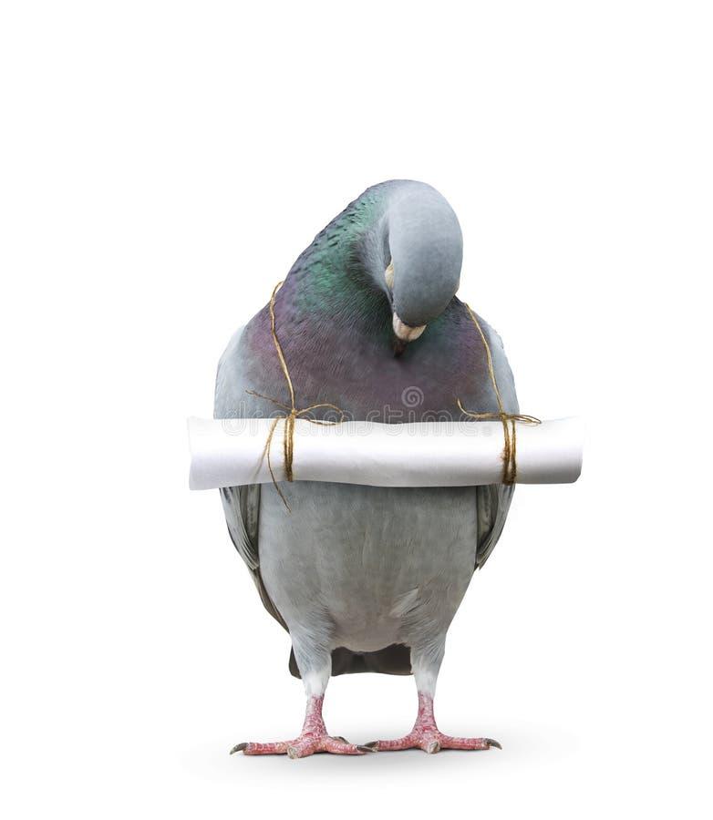 Taubenvogel und -papier beschriften die Mitteilung, die am Hals für communi hängt lizenzfreies stockbild