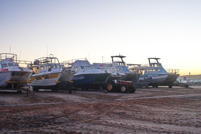 Tauchende Boote des Haifischk?figs stockfotografie
