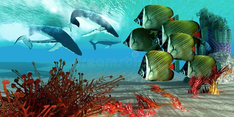 Tauchens-Wale stock abbildung