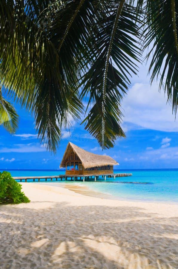 Tauchensklumpen auf einer tropischen Insel lizenzfreies stockfoto