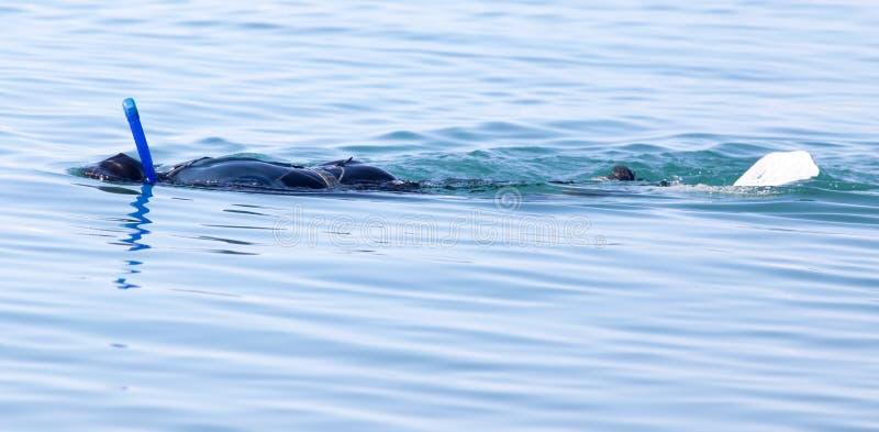 Taucher auf dem See stockbild