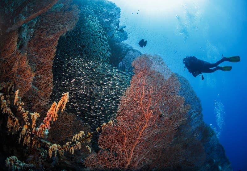 Taucher nahe bei Koralle lizenzfreies stockbild