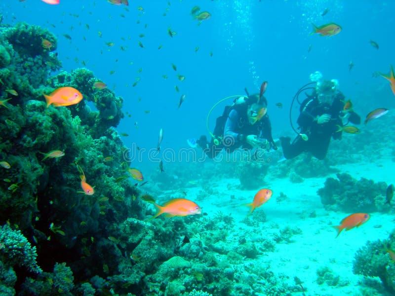 Taucher und Koralle lizenzfreie stockbilder