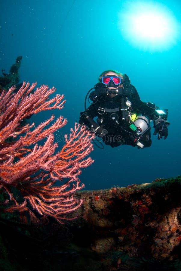 taucher und koralle stockbild bild von technisch wand