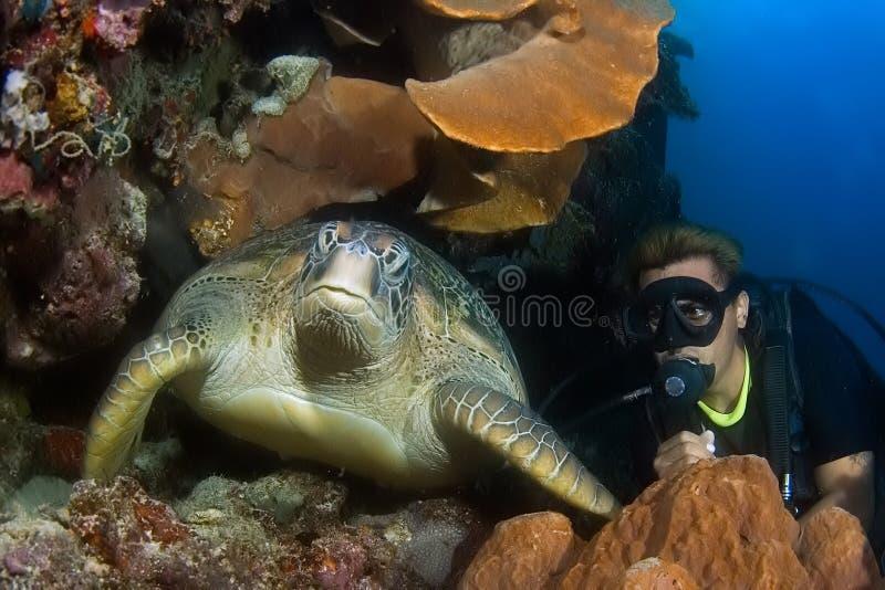 Taucher und Schildkröte Indonesien Sulawesi stockfotos