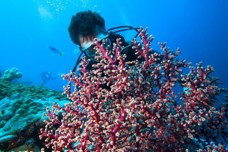 Taucher und weiche Koralle stockbild