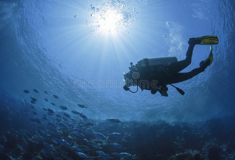 Taucherschwimmen in einem Roten Meer lizenzfreie stockbilder