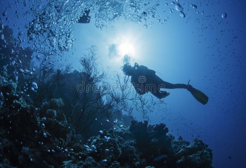 Taucherschwimmen in einem Roten Meer lizenzfreie stockfotos