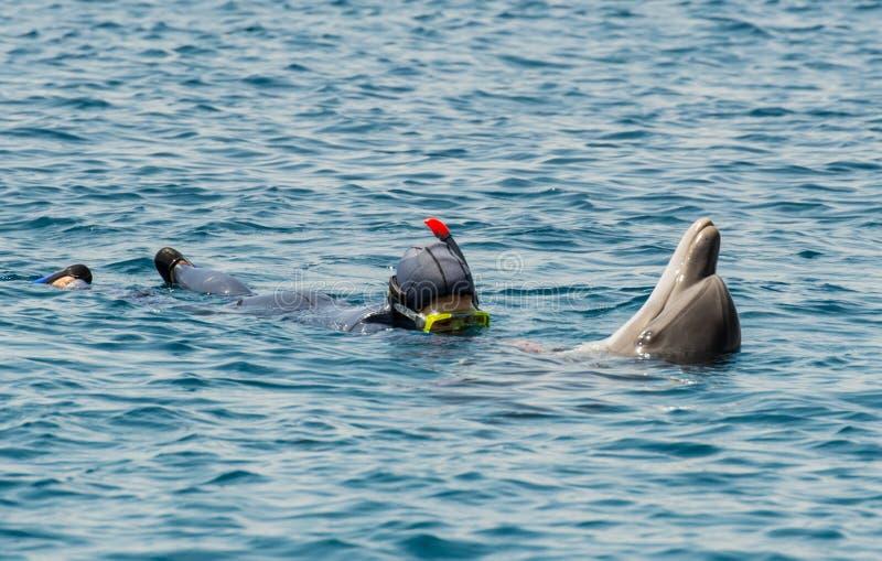Taucherspiel mit Delphin lizenzfreies stockfoto