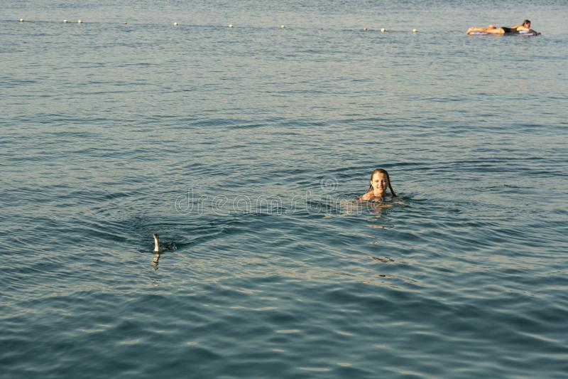 Tauchervogel in dem Meer stockbild