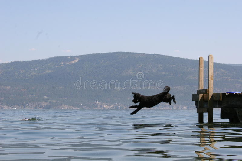 Tauchhund stockfoto