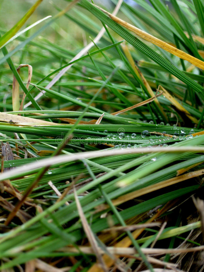 Taunasses Gras stockfoto