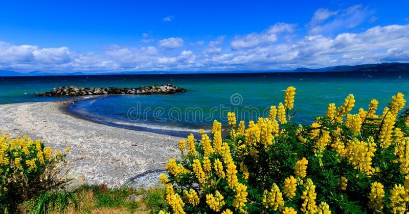 Taupo jezioro fotografia royalty free