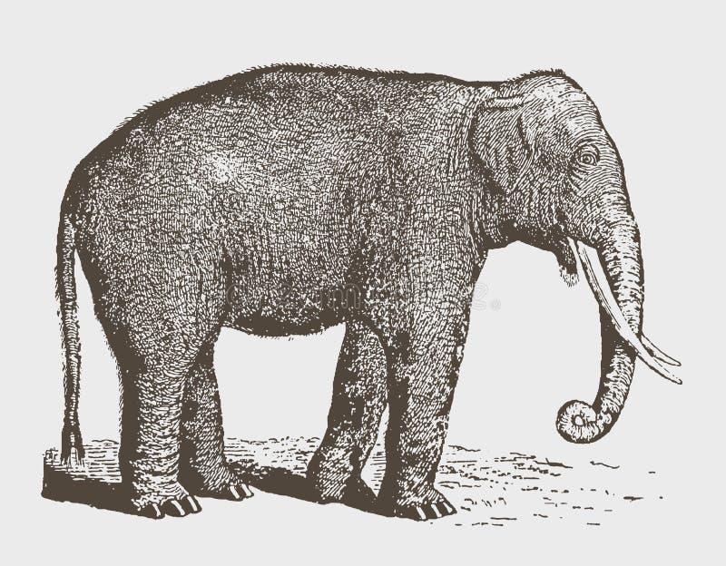 Taureau masculin mis en danger d'indicus de maximus d'Elephas d'éléphant d'Asie dans la vue de côté illustration libre de droits