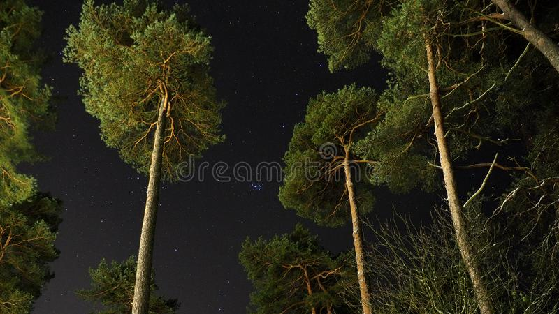 Pleiades open star cluster on night sky over green forest stock photos