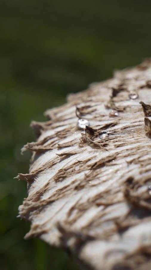 Tautropfen auf dem mushroomss Hut lizenzfreie stockfotografie