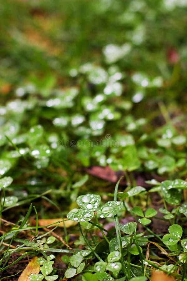 Tautropfen auf grünem Gras lizenzfreie stockfotos