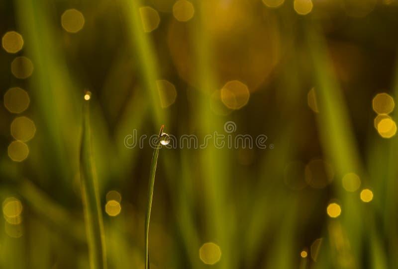 Tautropfen auf Gras lizenzfreie stockbilder