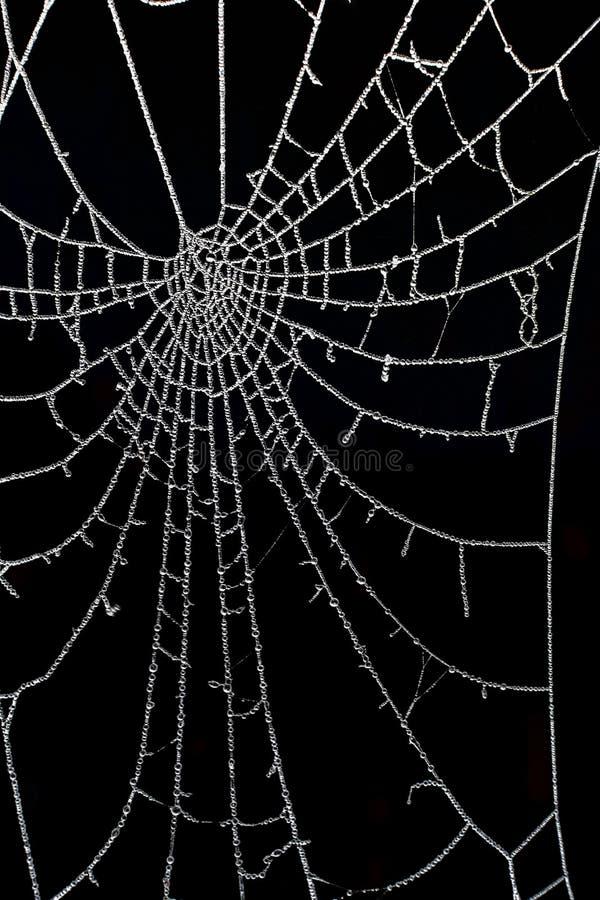 Tautropfen eingefroren des Spinnennetzes