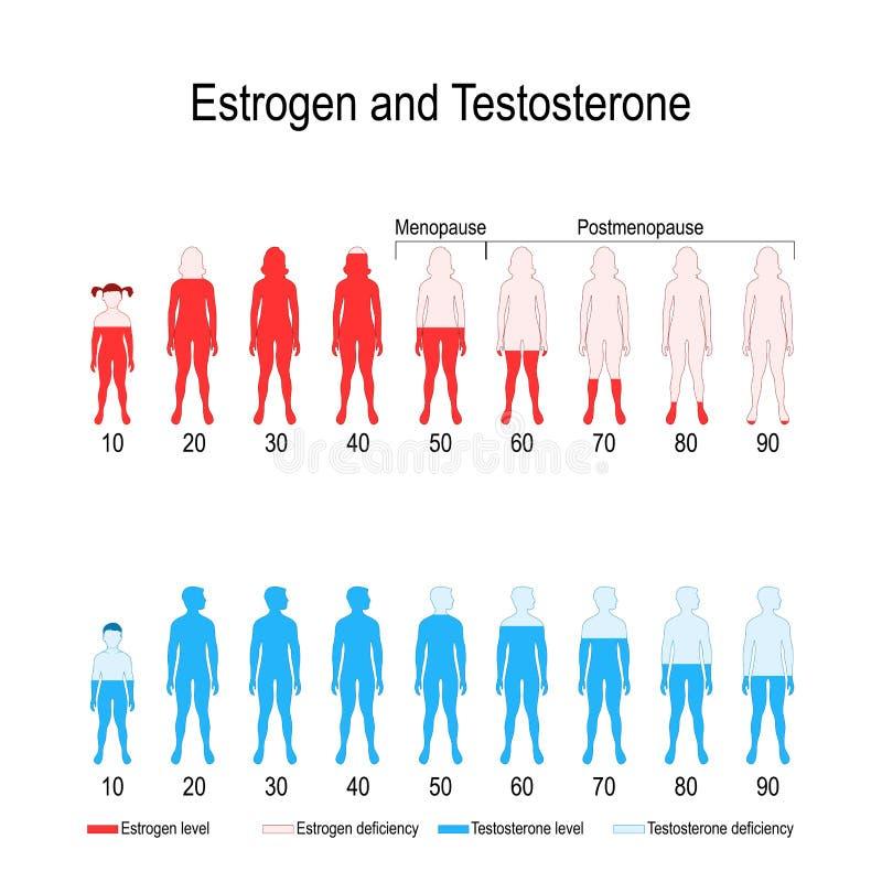 Taux hormonaux d'oestrogène et de testostérone illustration de vecteur