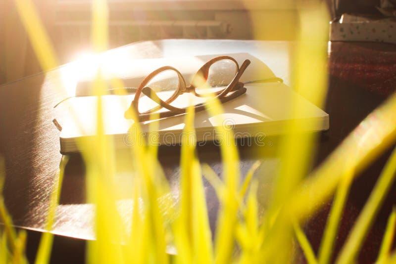 Tavola dell'ufficio di vista superiore, tavola con un taccuino aperto, un album, vetri, una pianta verde Colori saturati luminosi immagine stock
