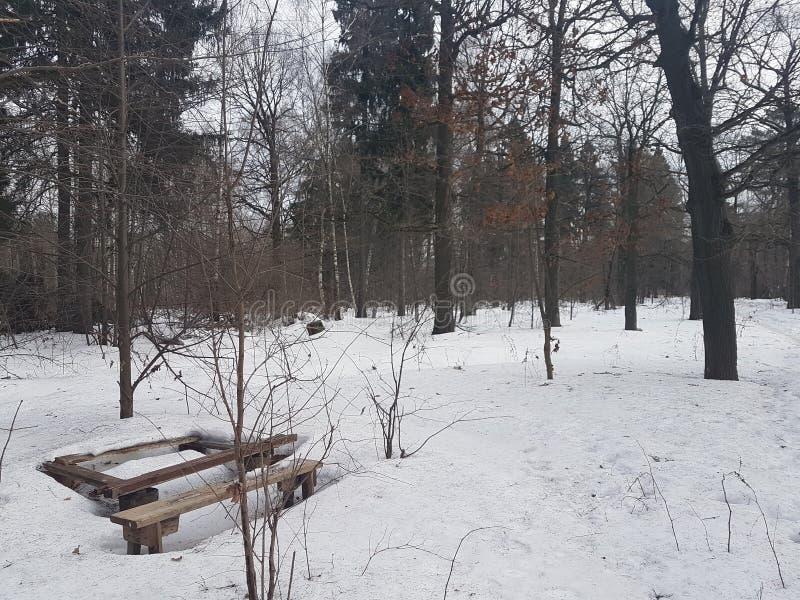 Tavola di legno e banco appassiti nella neve nella foresta immagine stock libera da diritti