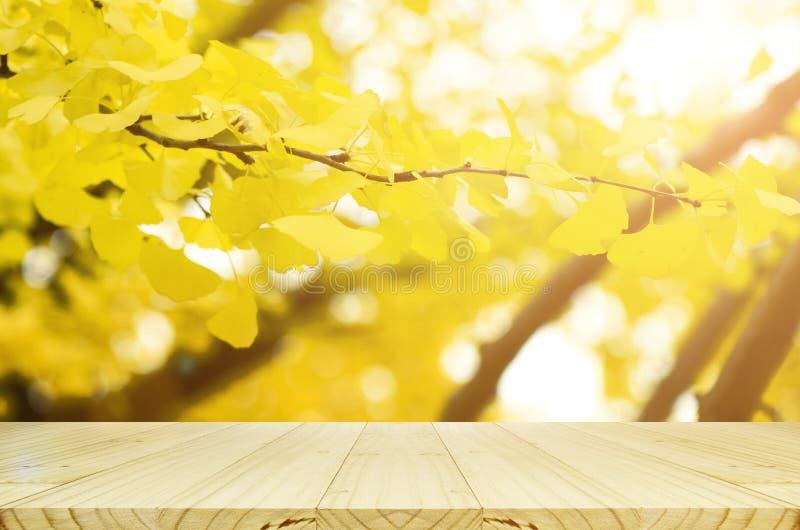Tavola di legno di prospettiva e completamente giallo delle foglie di autunno del ginkgo w fotografia stock