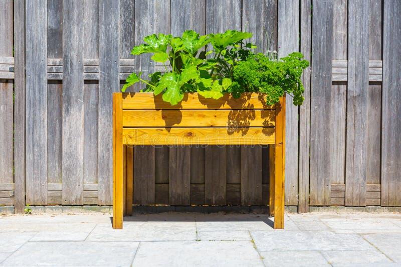 Tavolo da cucina di legno del potager di progettazione con le verdure e le erbe in un giardino fotografia stock libera da diritti