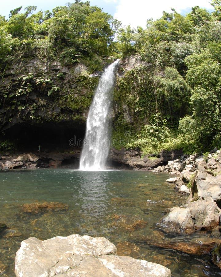 Download Tavoro waterfall stock photo. Image of tavoro, fijian - 9024846