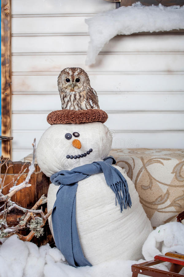 Tawny или сыч Брайна, aluco Strix, на снеговике стоковое фото