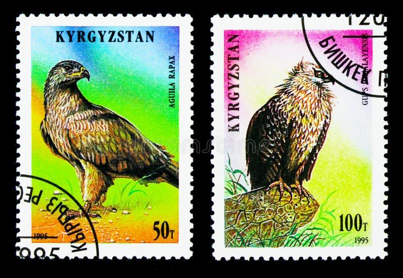 Tawny Eagle (rapax de Aquila) y buitre Himalayan (himalayensis) de los Gyps, pájaros del serie de la presa, circa 1995 foto de archivo libre de regalías