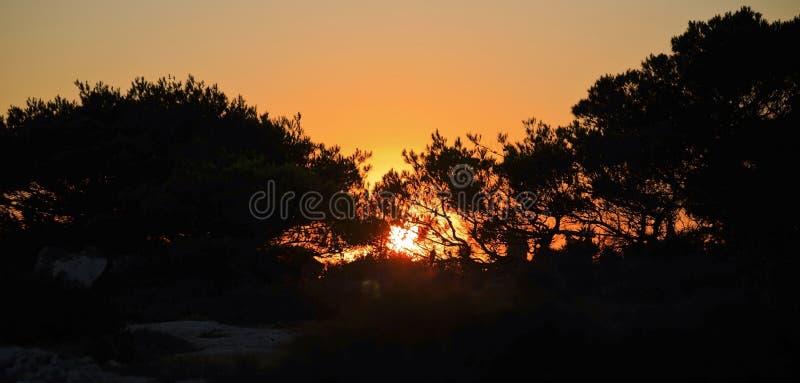 Tawny Sunset par les arbres et la brosse images stock