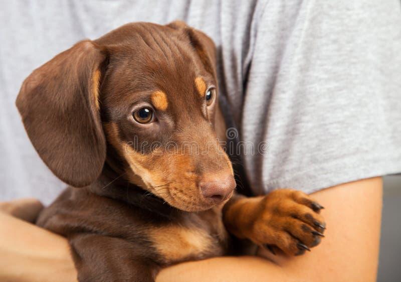 Tax för hundvalpavel förestående av en pojke, tonåringen och hans husdjur arkivbild