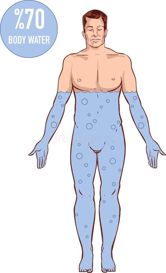 taxa de água no corpo humano ilustração do vetor