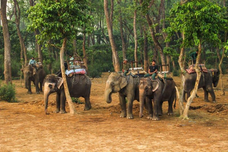 Taxi del elefante El caminar a lo largo del parque nacional en elefantes El montar en elefantes fotos de archivo libres de regalías