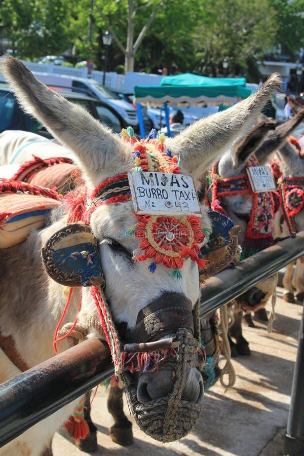 A taxi donkey stock photo