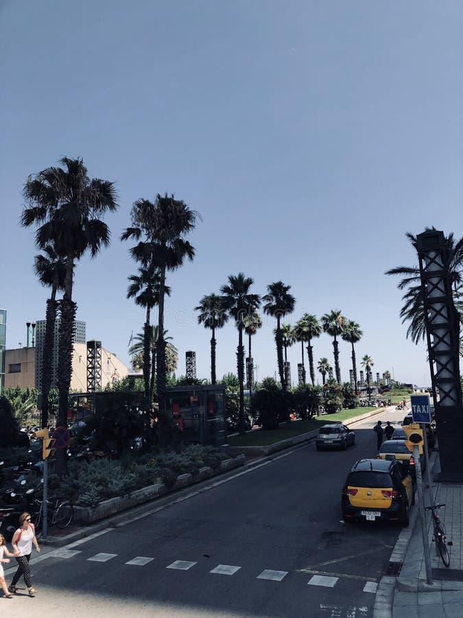 Taxi och palmtrees i Barcelona arkivbild