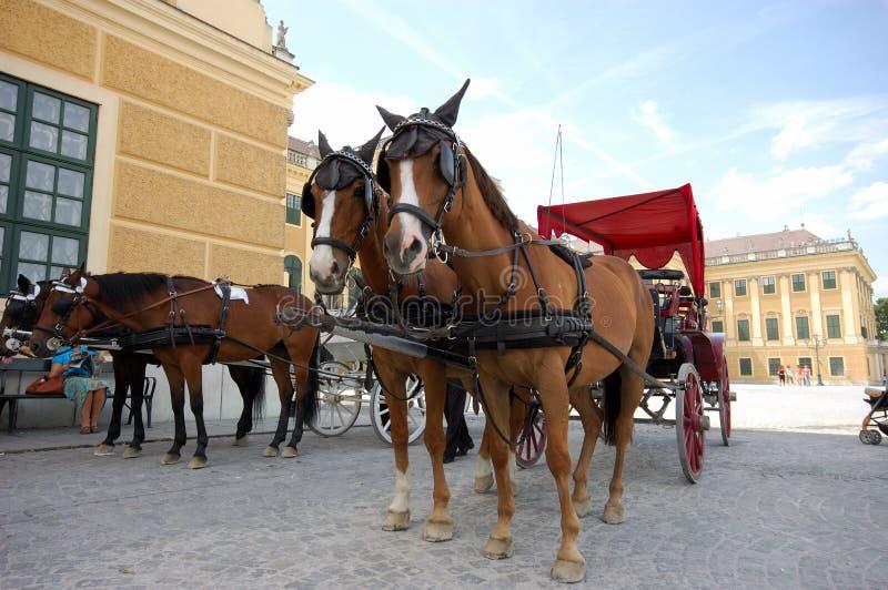 Taxis conduits par cheval photo libre de droits