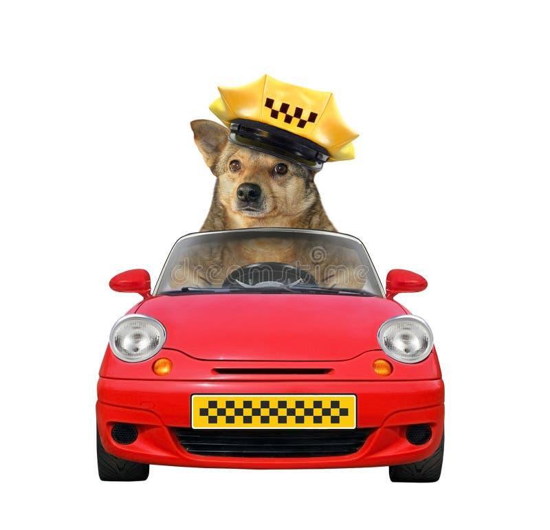 Taxista del perro en un coche fotos de archivo libres de regalías