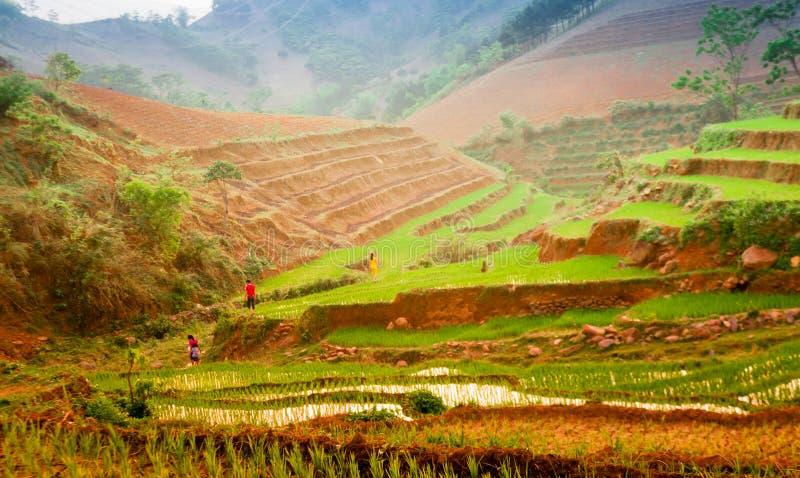 TaXua, Sonla, Vietnam photos libres de droits