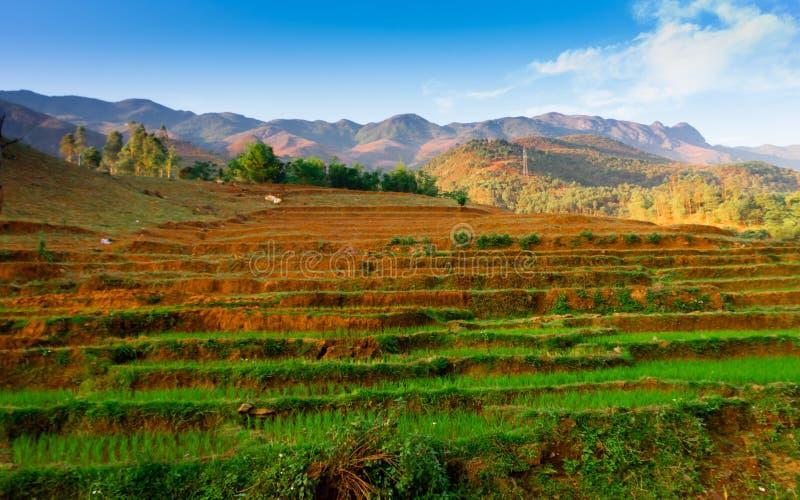 TaXua, Sonla, Vietnam images stock