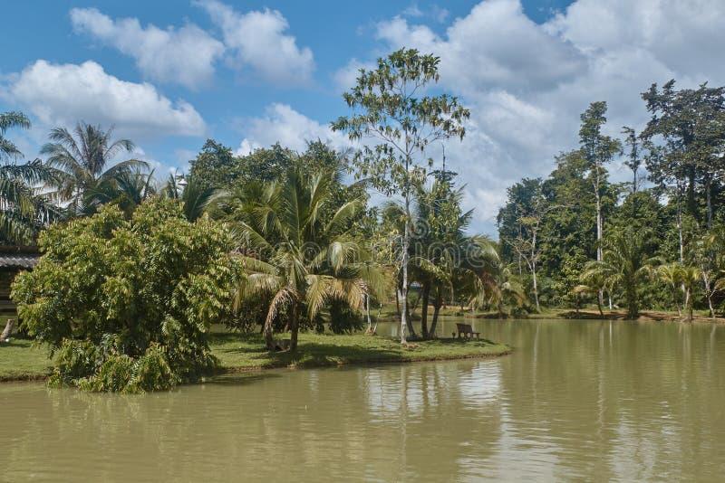 Tayland Parc autour d'un lac tropical photos stock