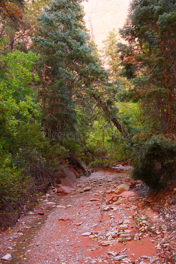 Taylor Creek-Spur stockfoto