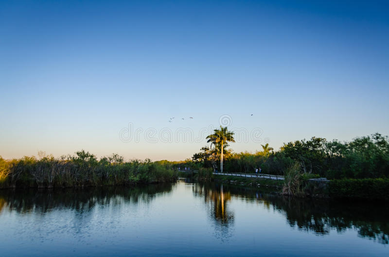 Taylor Slough - Everglades National Park. Twilight reflections on water at freshwater sawgrass marsh in Everglades National Park in Southern Florida stock photos
