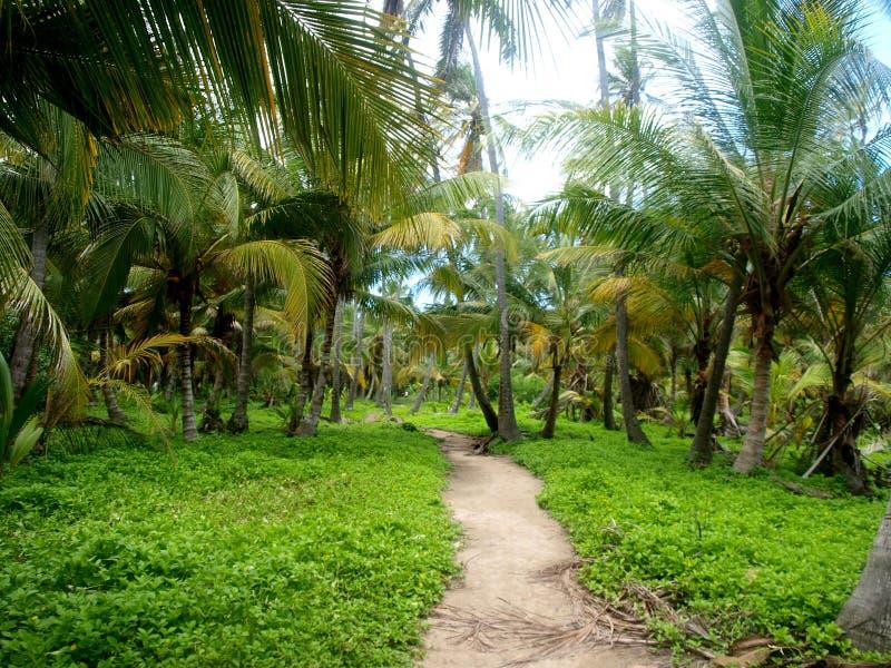 Tayrona国家公园,哥伦比亚 免版税库存照片