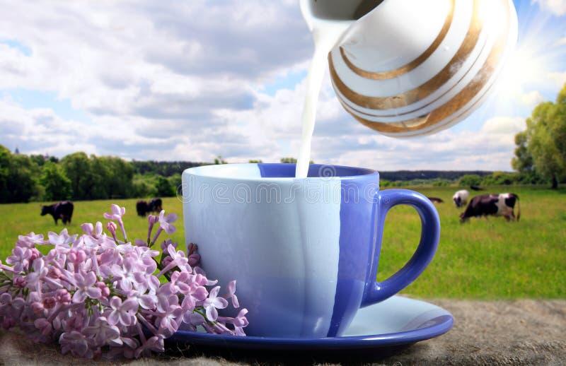Taza azul con leche foto de archivo