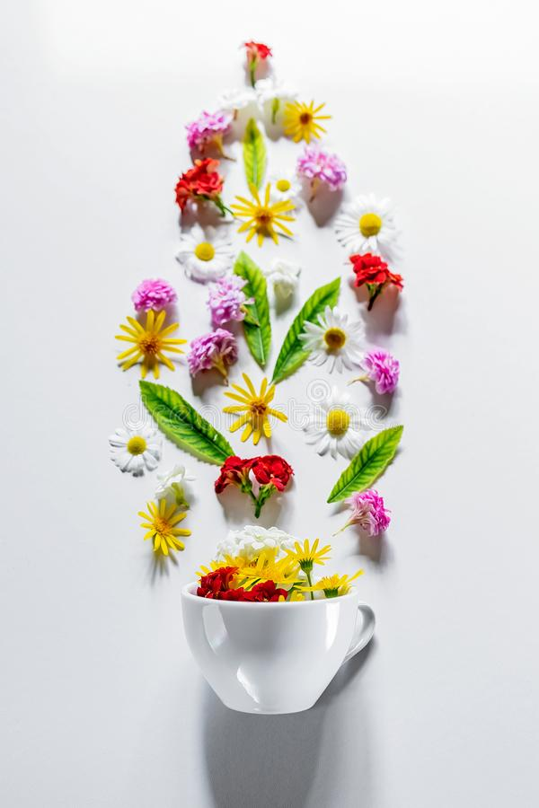Taza blanca con los ingredientes del té de la flor en un fondo blanco Verano del concepto, naturaleza, productos sanos de la comi imagen de archivo libre de regalías